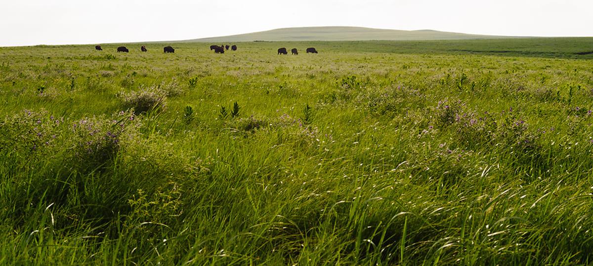 Tallgrass Prairie National Preserve featured 55th in National Park Quarter series